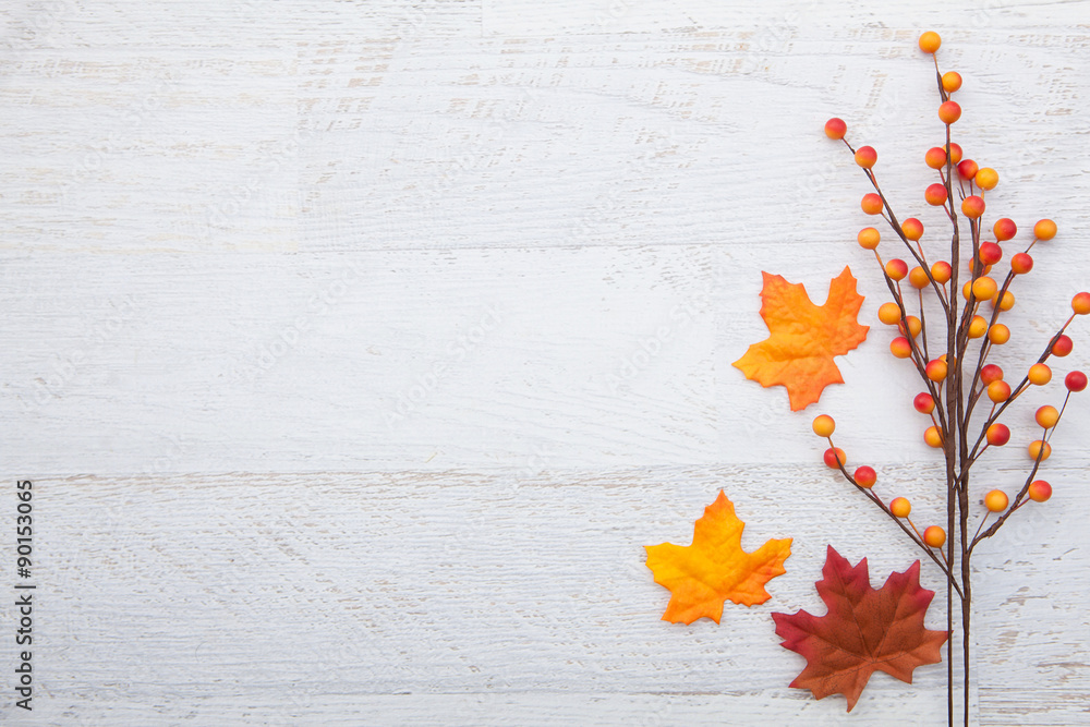 Fototapety, obrazy: Autumn Thanksgiving Background
