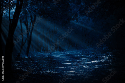 Wall Murals Forest Night forest