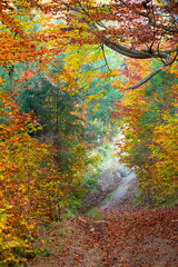 FototapetaSilent Autumn forest and footpath - colorful vibrant leaves and