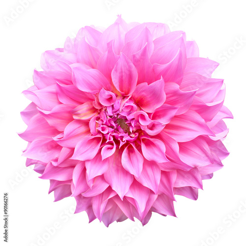 Photo sur Toile Dahlia Pink dahlia flower isolated on white background