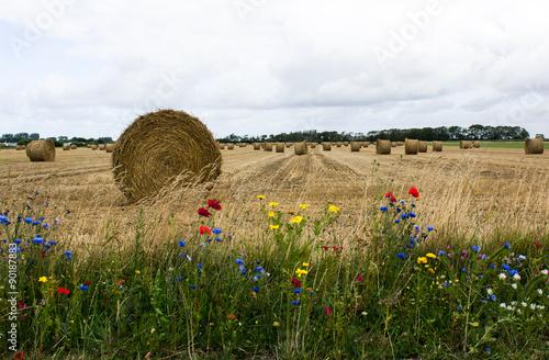 Deurstickers Meloen Moisson en Picardie