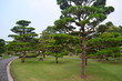 Park - Pine Trees