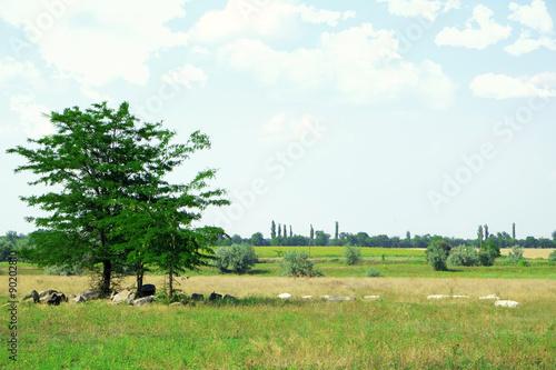 Foto op Canvas Pistache Beautiful countryside landscape