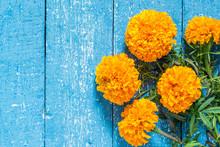 Orange Marigolds On A Blue Woo...