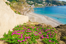 Flowers At Sandy Beach With Cl...
