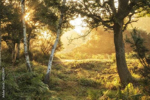 Canvas Prints Honey Stunning dawn sunrise landscape in misty New Forest countryside