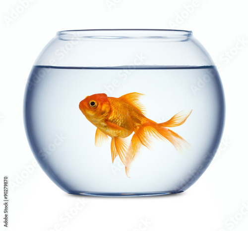 Tablou Canvas Goldfish in a fishbowl isolated on white background