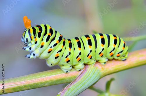 Fotografía  A close up of the caterpillar