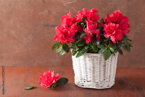 beautiful red azalea flowers in basket over rustic background