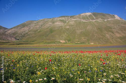 kwitnienie-castelluccio-di-norcia-niebieskie-niebo