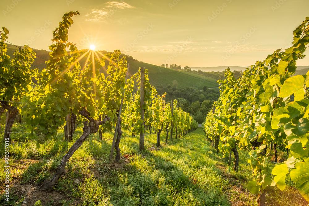Sonnenstrahlen beim Sonnenaufgang im Weinberg