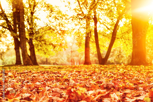 Aluminium Prints Yellow goldener Herbsttag