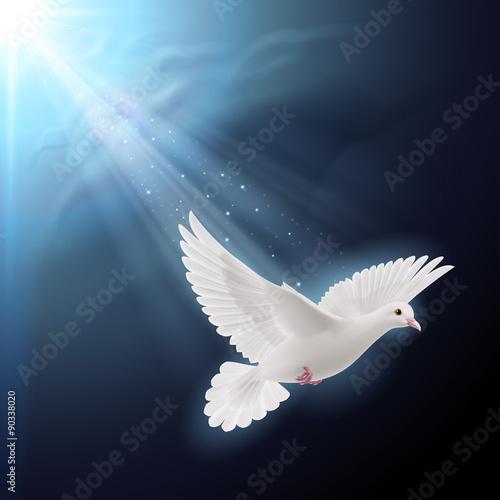Valokuva  White dove in sunlight