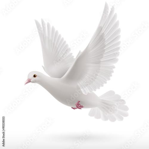 White dove Fototapete
