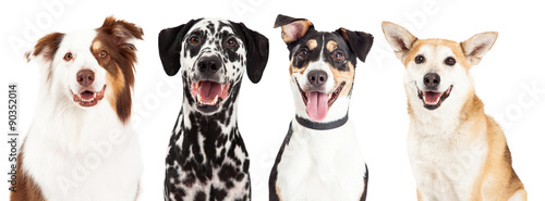 Poster Chien Four Happy Dog Closeups