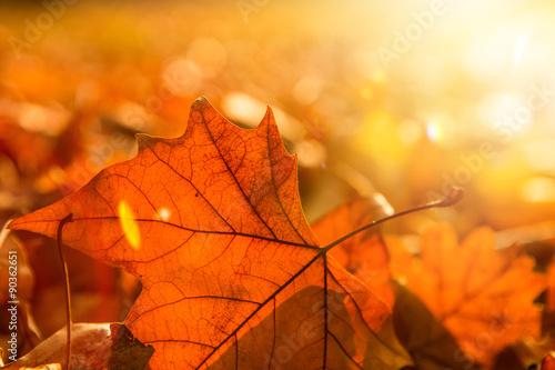 Poster Herfst licht und blatt im herbst