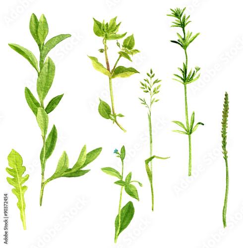Fototapeta Set of watercolor drawing herbs and leaves obraz na płótnie
