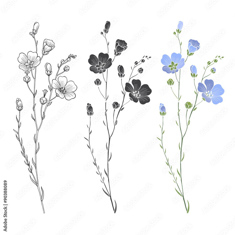 Fototapety, obrazy:  Flax plant with flowers and buds. Vector set.
