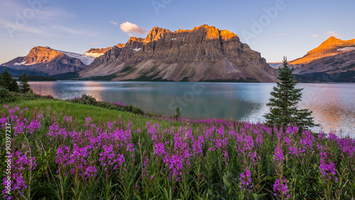 Poster Nieuw Zeeland Sunrise at Bow Lake in Banff National Park