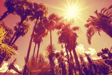 Sun Shining Through Tall Palm ...