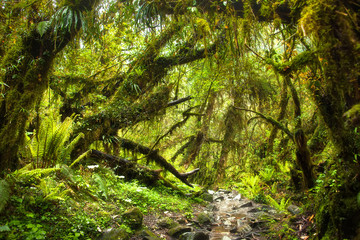 Mossy green rainforest at the foothills of Himalayas.
