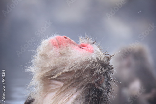 Keuken foto achterwand Aap 温泉に入りくつろぐスノーモンキー 長野県山ノ内町 地獄谷野猿公苑
