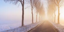 Road Through Foggy Winter Polder Landscape In The Netherlands.