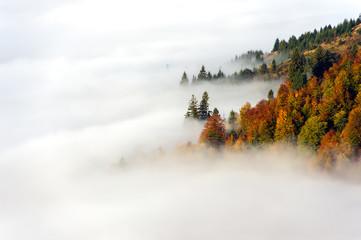 Fototapeta Do pokoju Autumn landscape