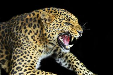 Fototapeta Zwierzęta Wild Leopard