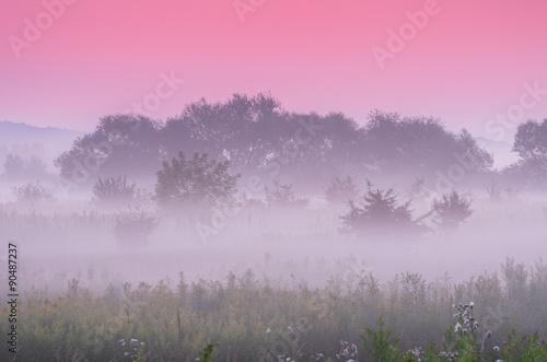 Deurstickers Lichtroze Calm dawn over misty meadow with pink sky