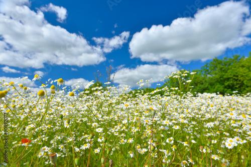Fototapeta łąka zielona-laka