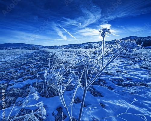Fotobehang Donkerblauw winter landscape with frozen plants