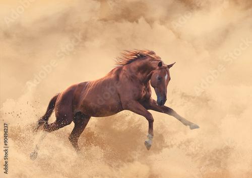 Photo  horse