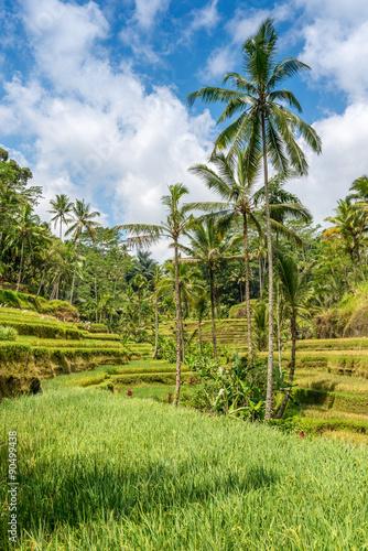 Foto op Aluminium Indonesië Incredible green rice field Bali, Indonesia