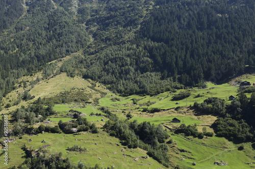 Fototapeta beautiful green mountain in switzerland with grass and blue sky obraz na płótnie