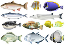 Different Kind Of Ocean Fish