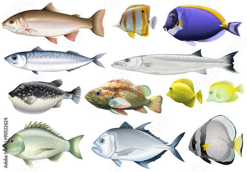 Fotografía  Different kind of ocean fish