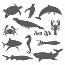 Minimal Sea Animals Silhouette Vector Illustration /  Sea Animals, Minimal, Icons, Underwater, Crab; Squid; Seahorse; Penguin; Seagull; Whale; Lobster; Shark; Turtle; Fur Seal; Dolphin;