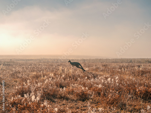 Kangaroo jumping in the mist