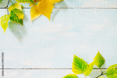 Obraz Autumn birch leaf on a blue wooden background - fototapety do salonu