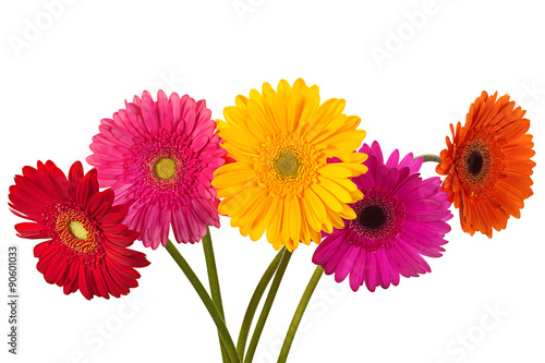 Deurstickers Gerbera Gerbera flower on white