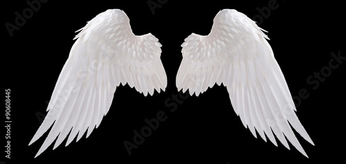 Foto  white angel wing isolated
