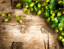 Hop Twig Over Old Wooden Table Background. Vintage Style. Beer Production. Brewing