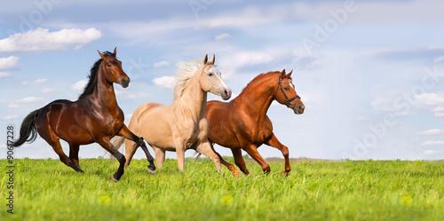 trzy-konie-biegna-w-pieknej-zielonej-lace