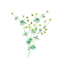 Isolated Bouquet Of Yellow Wildflowers Painted In Watercolor On A White Background, Decoration Postcard, Greeting Card Or Invitation