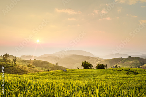 Foto auf Leinwand Reisfelder Terraced rice field