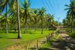 Palmenzucht