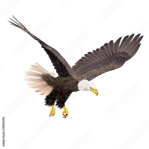 In de dag Eagle Bald eagle isolated on white background.