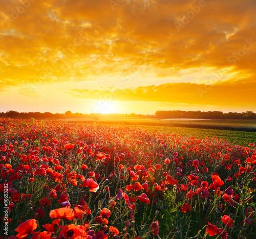 Recess Fitting Orange Glow Poppy field