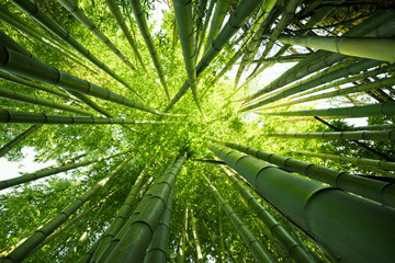 Panel Szklany Drzewa Green bamboo nature backgrounds